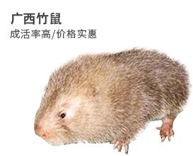 广西竹鼠|广东竹鼠|广西竹鼠种苗|广西竹鼠养殖
